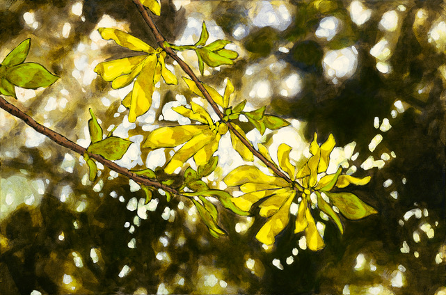 Light Study Forsythia